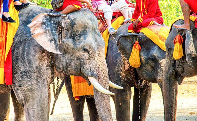 バンコク周辺では象さんたちとのんびり過ごせますよ