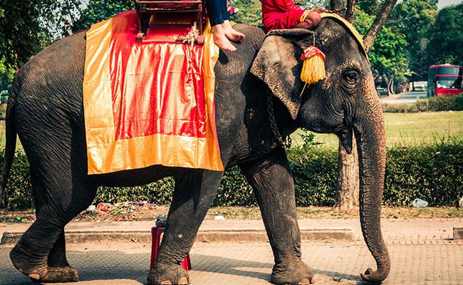 象さんはショーにトレッキングに大活躍!